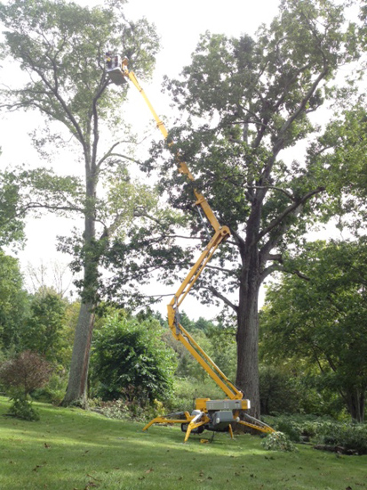 Welcome To 525 Tree Corp Providing Tree And Plant Care